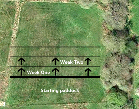 Grazing Systems Inside Out Hoofcare Equine Podiatrist